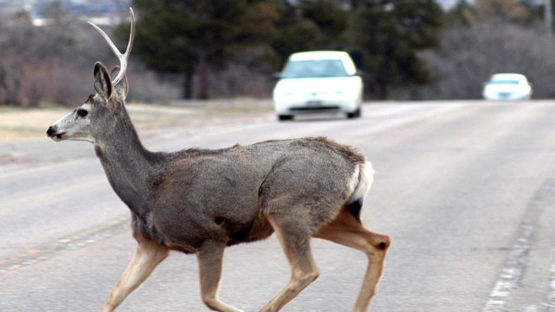Accidentes de tráfico y animales
