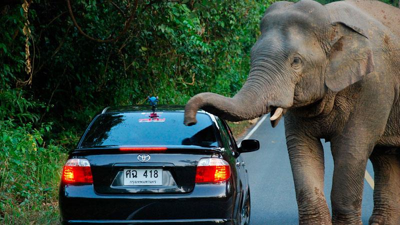 elefante-con-un-vehiculo---efecto-elefante